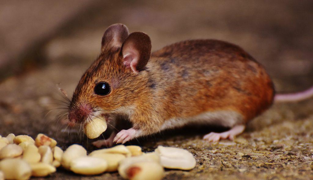 ネズミさんとモグラくんの楽しいおうち ウォン・ハーバート・イー/作 小野原千鶴/訳 小峰書店