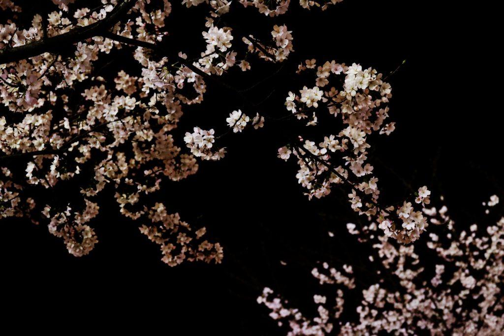 火の降る夜に桜舞う くのいち小桜忍法帖 斉藤洋/作 大矢正和/絵 あすなろ書房