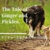 【ジンジャーとピクルズやのおはなし】トラ猫ジンジャーとテリア犬ピクルズの雑貨屋さ